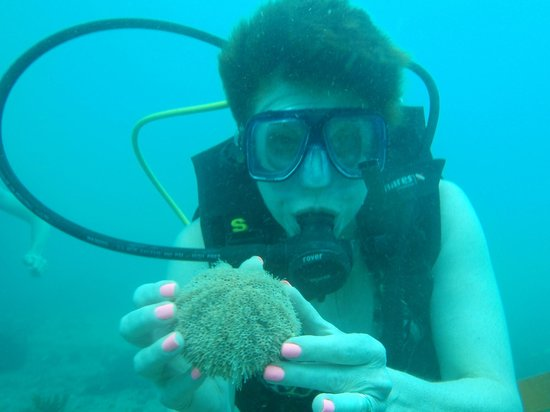 Chico's Dive Shop: Puffer fish