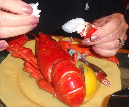 Ryer Lobsters: Waiting for the claws. My favorite.