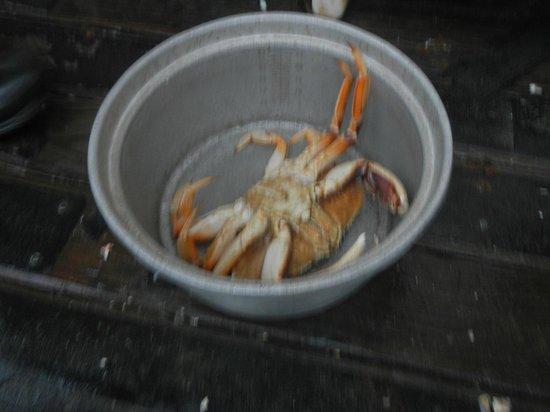 Kelly's Brighton Marina: Crab