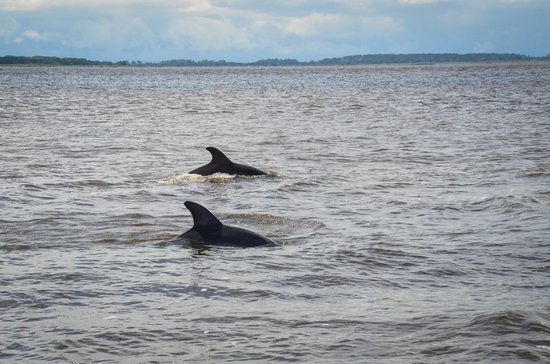 Captain Mike's Dolphin Tours : dolphins