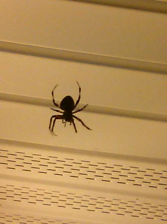 Days Inn Newport News: this was the spider outsied