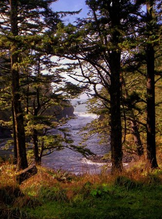 Cape Disappointment State Park: View from the trail - 10-29-2011