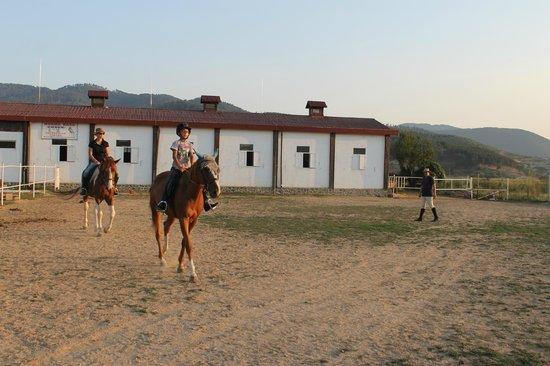 Equestrian Center Sivek: manege