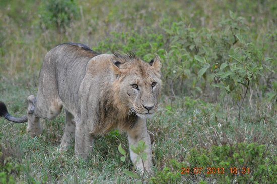 Heritage of African Jungles: it almost touched the tyre of our safari van