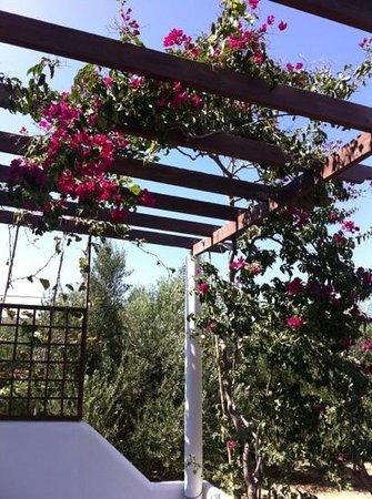 Nefeli Apartments: patio