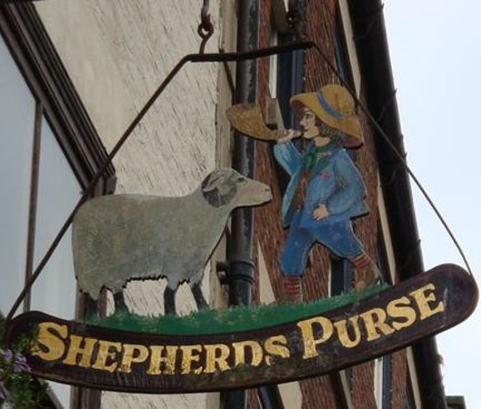 The Shepherd's Purse: Shepherds Purse sign