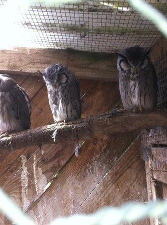 Small Breeds Farm Park and Owl Centre: Sleeping Owls