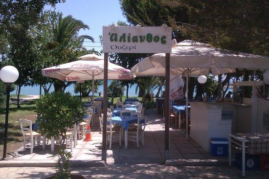Alianthos