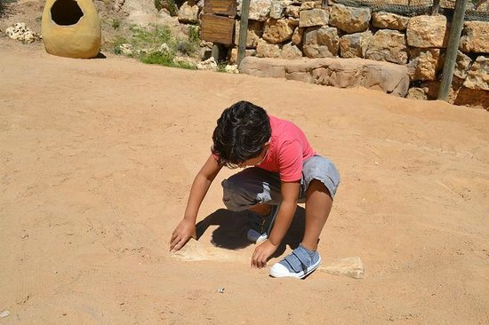 Territorio Dinópolis: En la paleosenda diversión para los mas pequeños