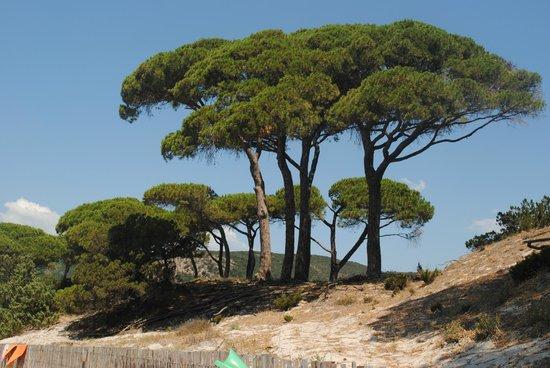 Plage de Palombaggia : Palombaggia