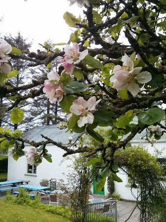 Ballygawley, UK: Orchard Blossom