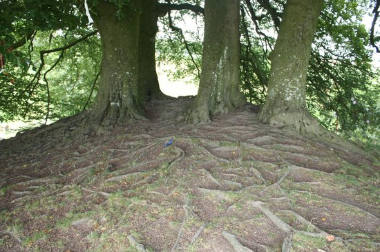 Avebury, UK: Tolkien's trees