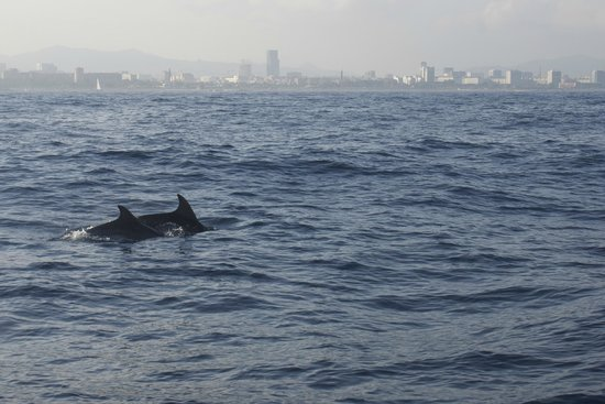 Yacht Charter Barcelona: Dolphins and Barcelona