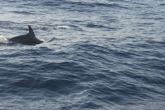 Yacht Charter Barcelona: Dolphin from a close view