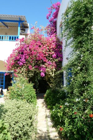 Creta Sun Hotel Studios : path with our room on the right
