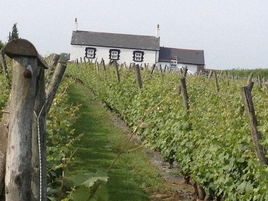 Llanerch Vineyard : View of Hotel from front