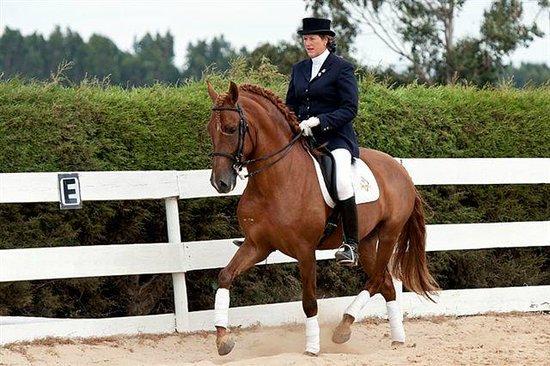 Equus Ourique