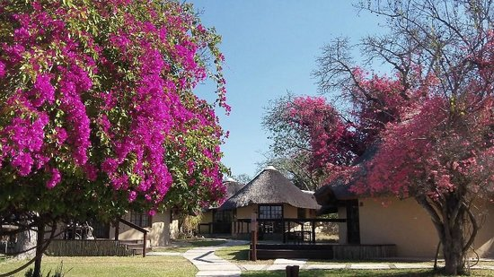 Elephant Plains Game Lodge: Landscaping surrounding our rondavel