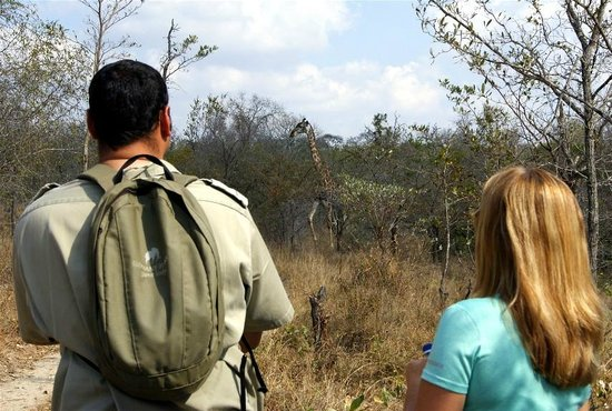 Elephant Plains Game Lodge: Giraffe on a bush walk