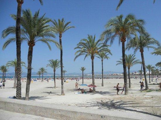 Hotel Mediodia: spiaggia di fronte all'hotel