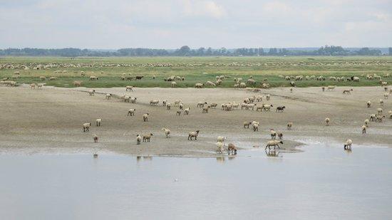 Le Relais Guillaume de Normandy: Moutons 'pré salé' en face du restaurant
