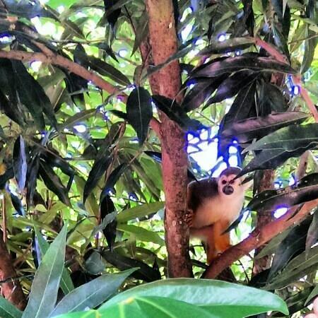 Anaula Nature Resort : Aapjes in de tuin zijn van zeer dichtbij te benaderen.
