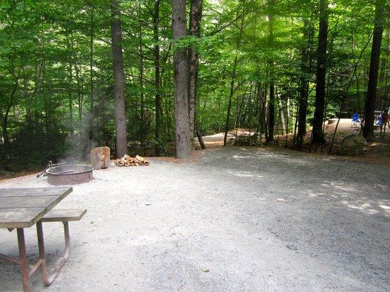 Jamaica State Park Campground: Site 31
