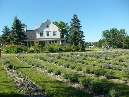 Knowlton, Canada: Maison et champ de lavande