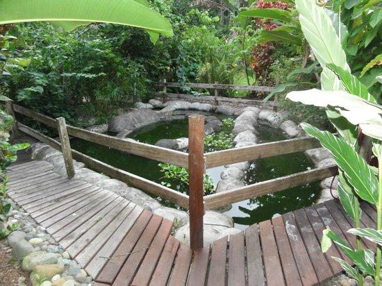 Casa Renada: Schöne Gartenanlage mit Teich