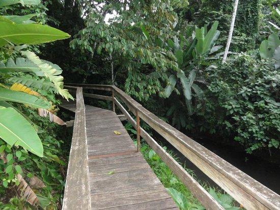 Casa Renada: Holzsteg neben Weiher und Bäumen vorbei