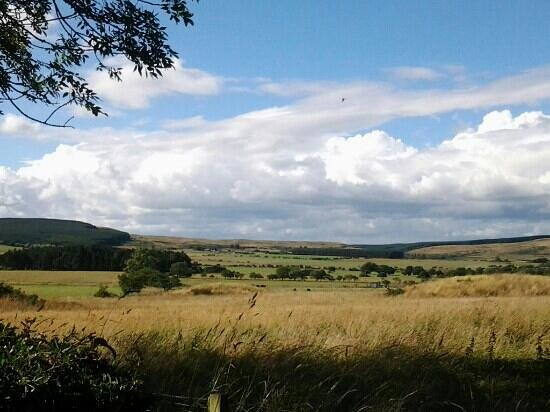 Bliss in the Sticks: The view from the front door of Bamburgh Lodge
