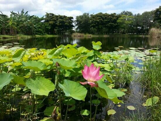 Bradenton, FL: Palma Sola Botanical Garden - Taken 7/15/13