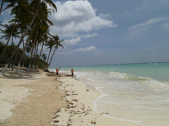Anda White Beach Resort : The view from the beach.