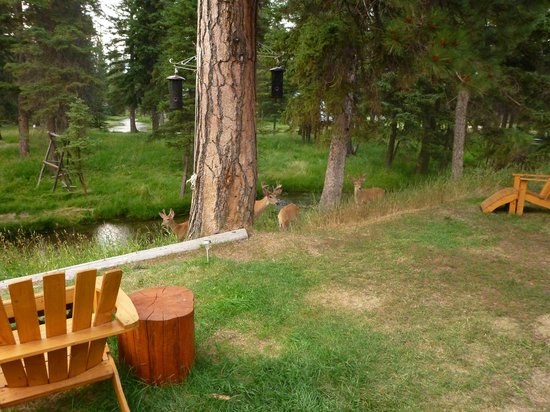 Hotel Lincoln: Oh Deer!!!!