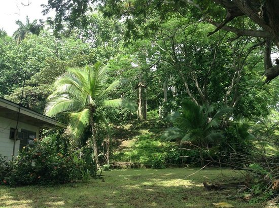 Dos Palmitos: A view of the neighborhood