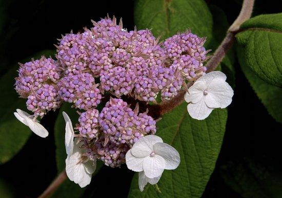 Kendal, UK : Flower in garden