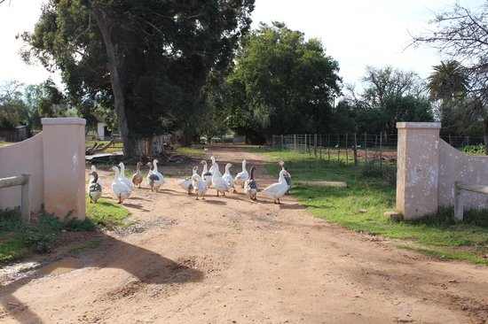 Thabile Lodge: The farmyard