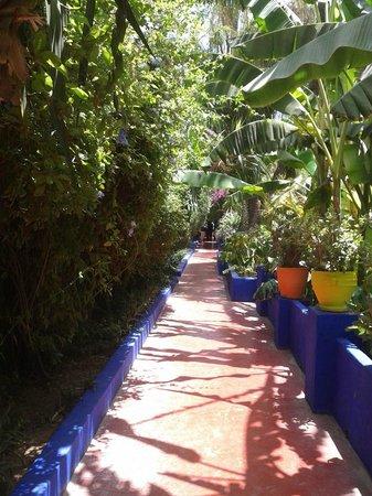 Caminhos de Marrocos - Day Tours: Jardins of Majorelle