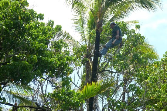 Ahalanui Park: Worker trimming trees