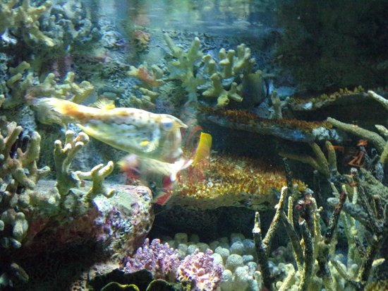 Tropical fish picture of national aquarium baltimore for Maryland freshwater fish