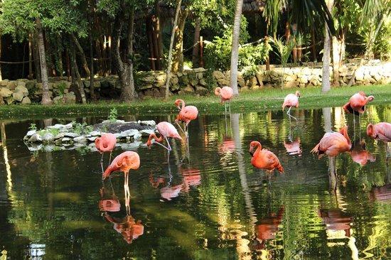 Grand Palladium Kantenah Resort & Spa: Des flamants