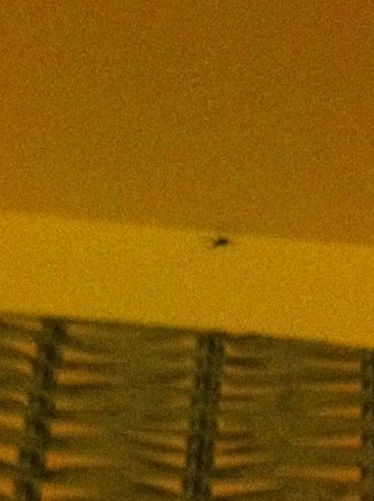 Holiday Inn Express Hotel & Suites Port Aransas / Beach Area: Bugs