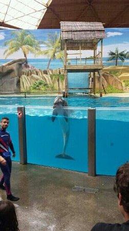 Boudewijn Theme Park and Dolfinarium : dolphin show!