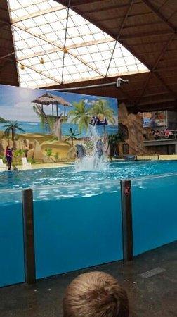 Boudewijn Theme Park and Dolfinarium : during show