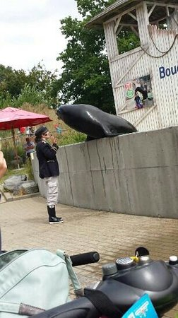 Boudewijn Theme Park and Dolfinarium : sealion show