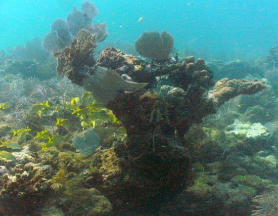 Captain Hook's Marina & Dive Center: colorful shallow reefs