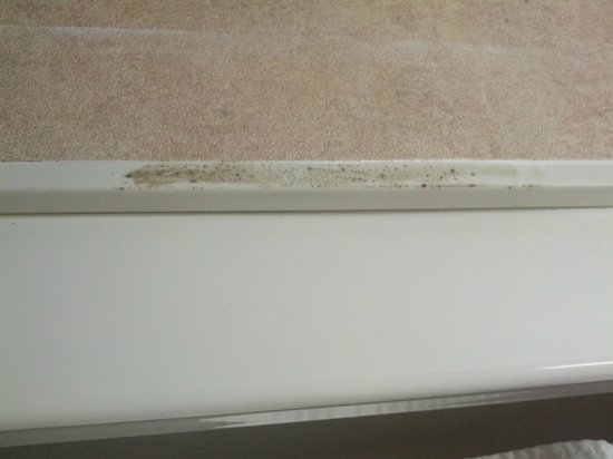 Ramada Amherst/Getzville Hotel and Conference Center : Mold in bathroom