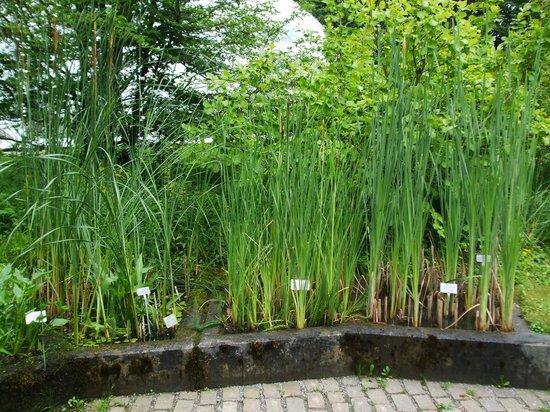 Botanical Garden (Botanischer Garten): Plants