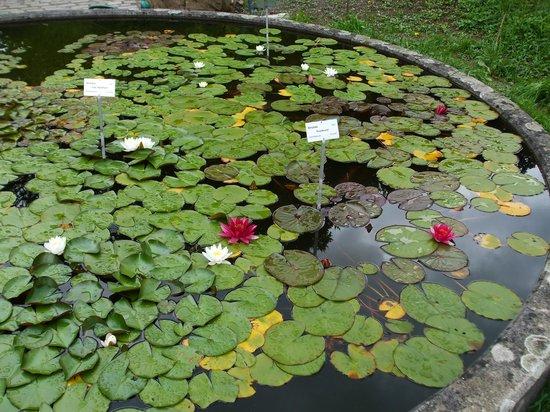 Botanical Garden (Botanischer Garten): Lilly ponnd