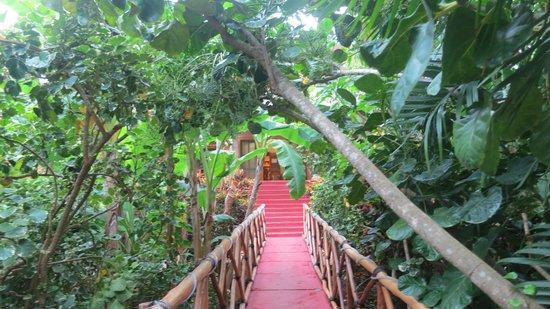 Casa Hamaca Guesthouse: L'ingresso attraverso il giardino